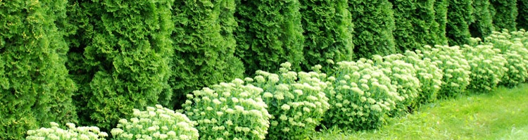 Landscaping Services in Sykesville, Clarksville MD, Ellicott City